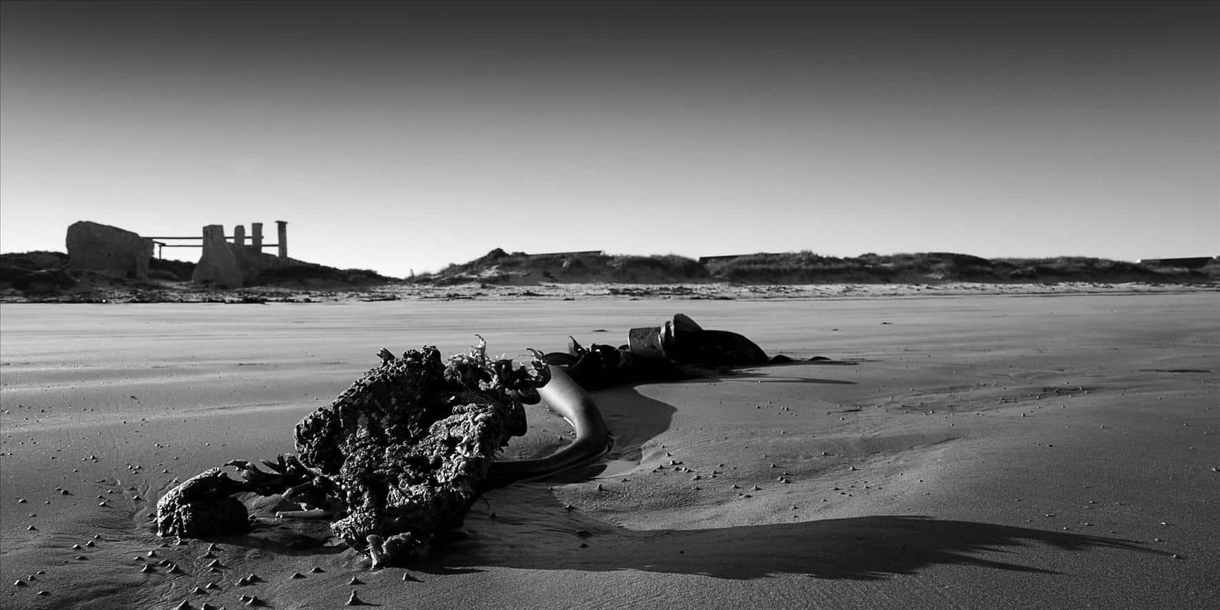 sea shore seaweeds